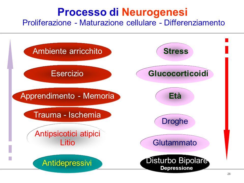 Processo di Neurogenesi
