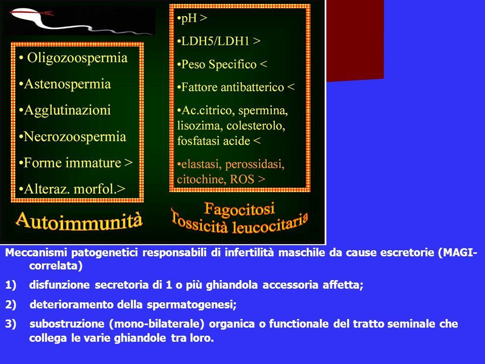 Meccanismi patogenetici responsabili di infertilità maschile da cause escretorie (MAGI-correlata)