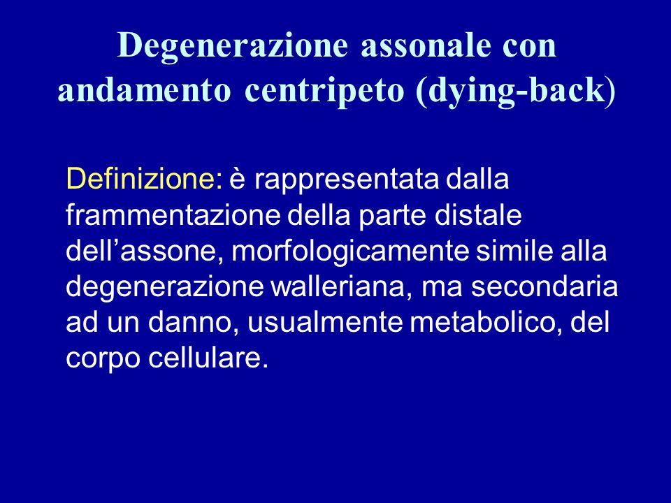 Degenerazione assonale con andamento centripeto (dying-back)
