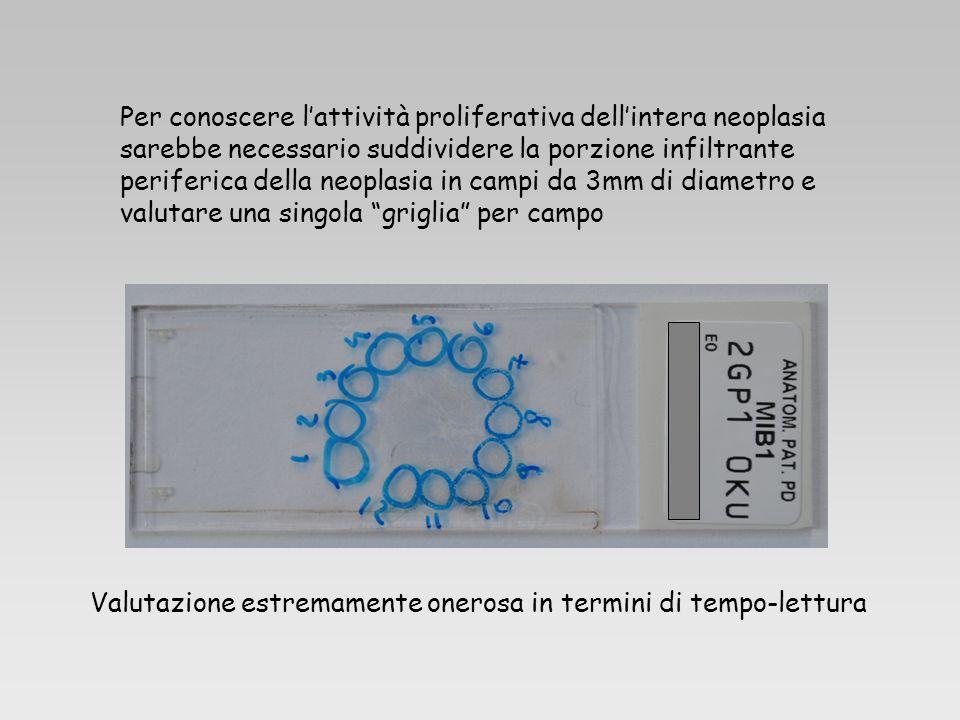 Per conoscere l'attività proliferativa dell'intera neoplasia sarebbe necessario suddividere la porzione infiltrante periferica della neoplasia in campi da 3mm di diametro e valutare una singola griglia per campo