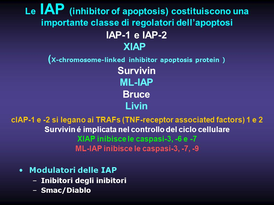(X-chromosome-linked inhibitor apoptosis protein ) Survivin ML-IAP