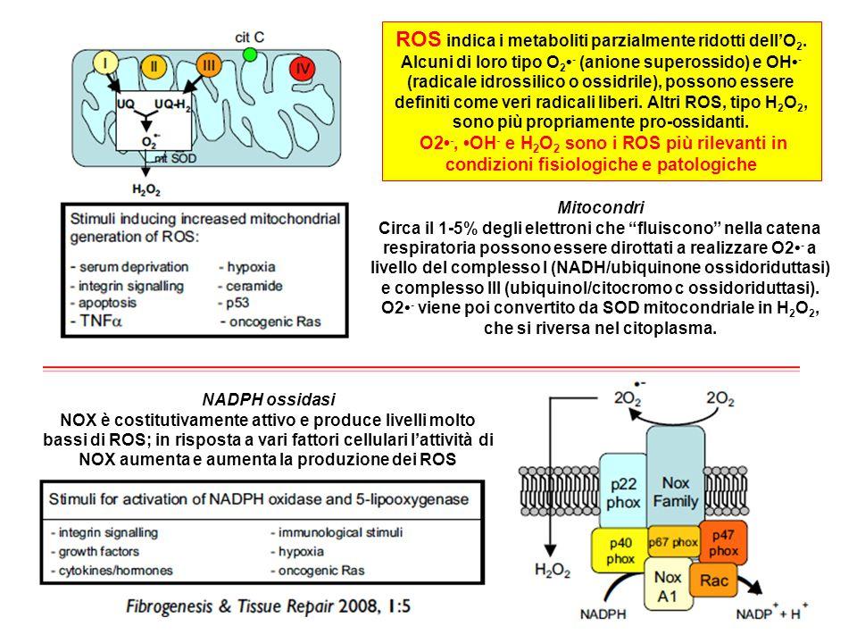 ROS indica i metaboliti parzialmente ridotti dell'O2
