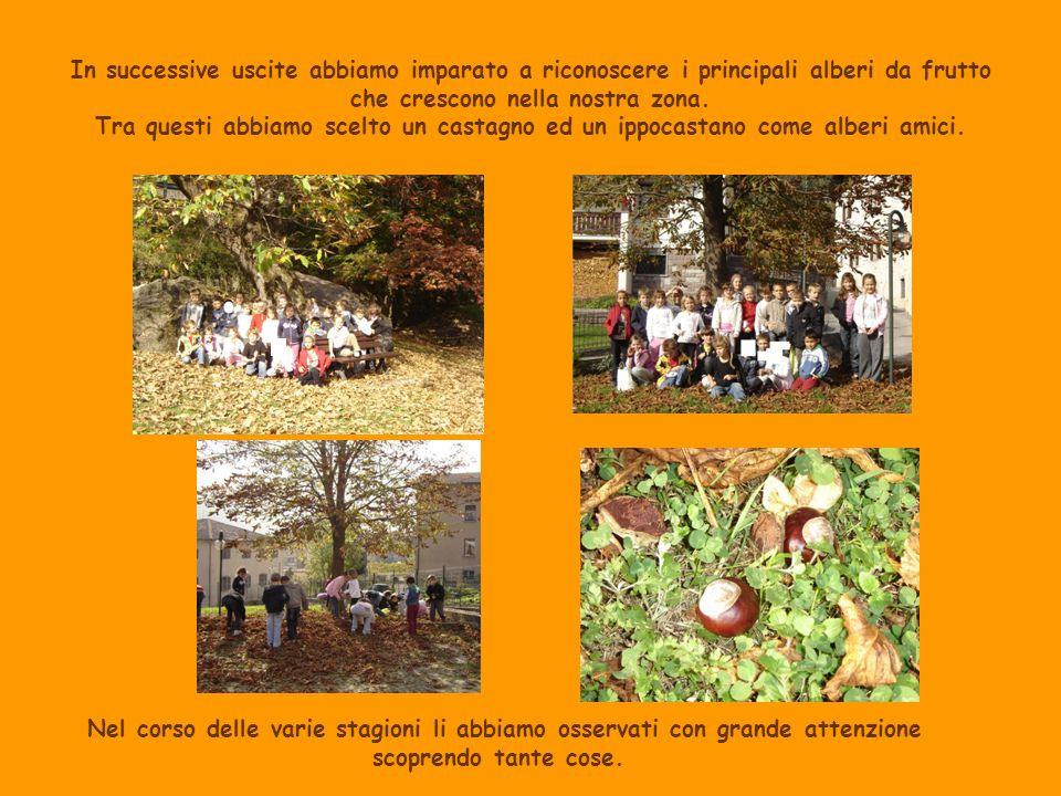 In successive uscite abbiamo imparato a riconoscere i principali alberi da frutto che crescono nella nostra zona. Tra questi abbiamo scelto un castagno ed un ippocastano come alberi amici.