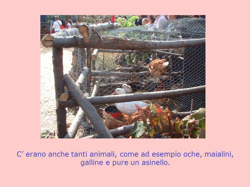 C' erano anche tanti animali, come ad esempio oche, maialini, galline e pure un asinello.