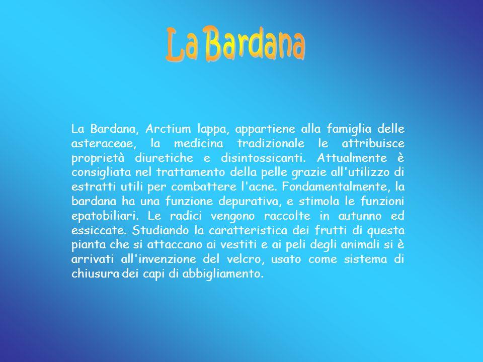 La Bardana