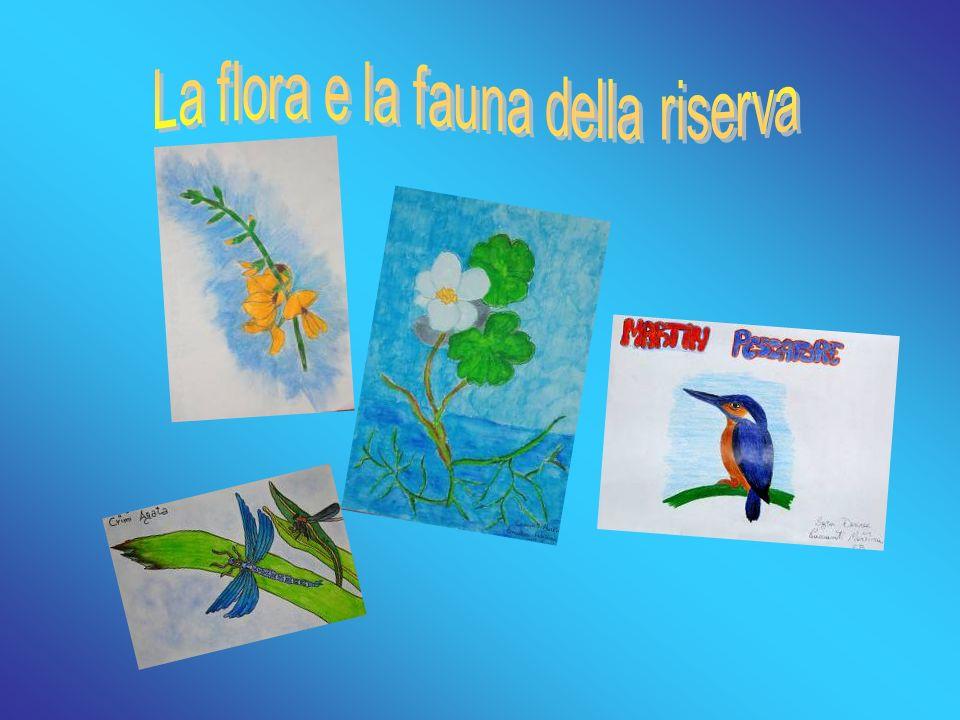 La flora e la fauna della riserva