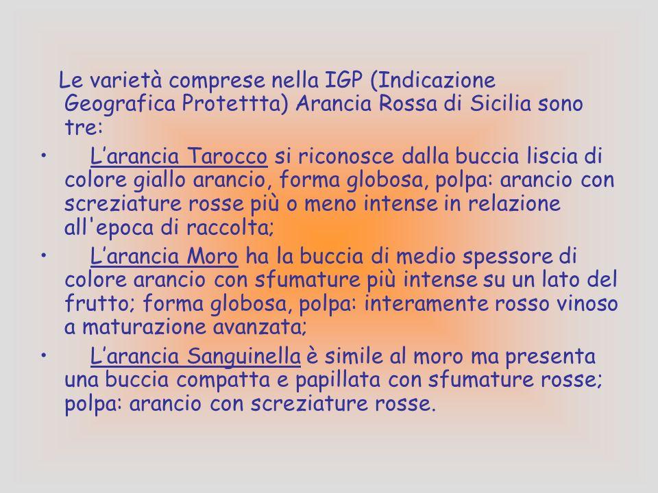 Le varietà comprese nella IGP (Indicazione Geografica Protettta) Arancia Rossa di Sicilia sono tre: