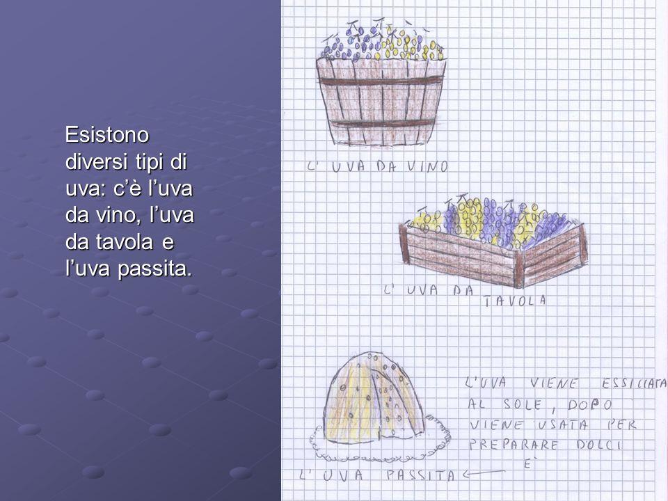 Progetto ed alimentare dall uva al vino ppt video online scaricare - Tipi di olive da tavola ...