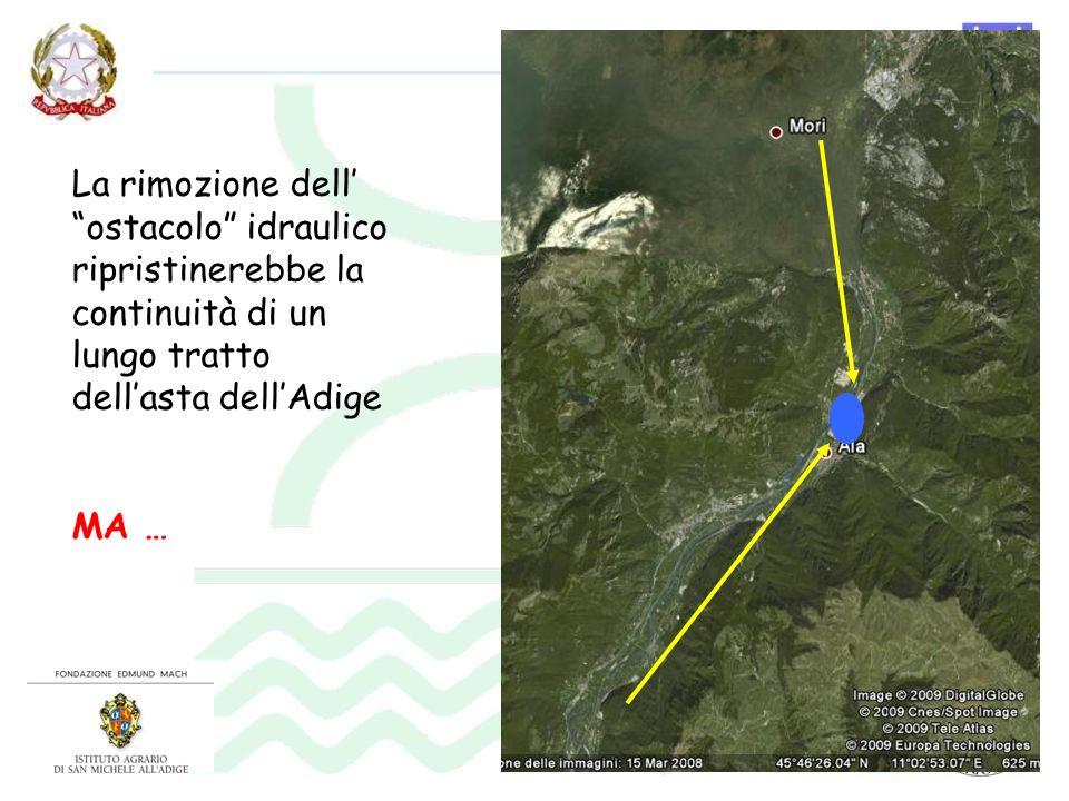 La rimozione dell' ostacolo idraulico ripristinerebbe la continuità di un lungo tratto dell'asta dell'Adige