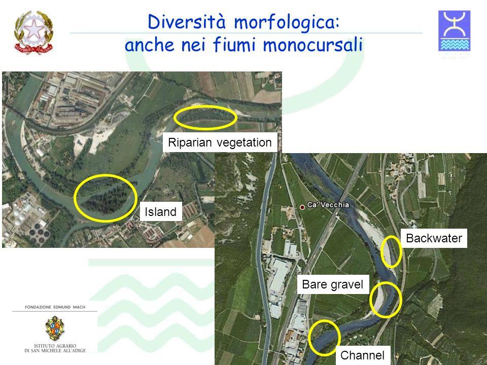 Diversità morfologica: anche nei fiumi monocursali