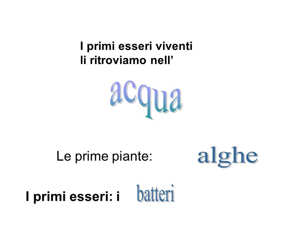 acqua alghe batteri Le prime piante: I primi esseri: i