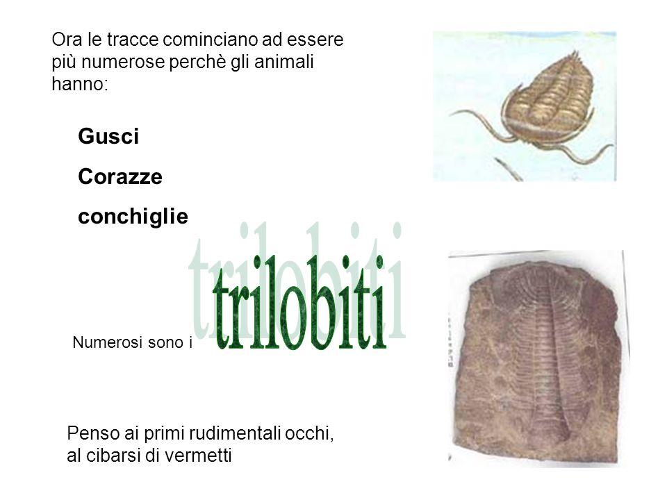 trilobiti Gusci Corazze conchiglie