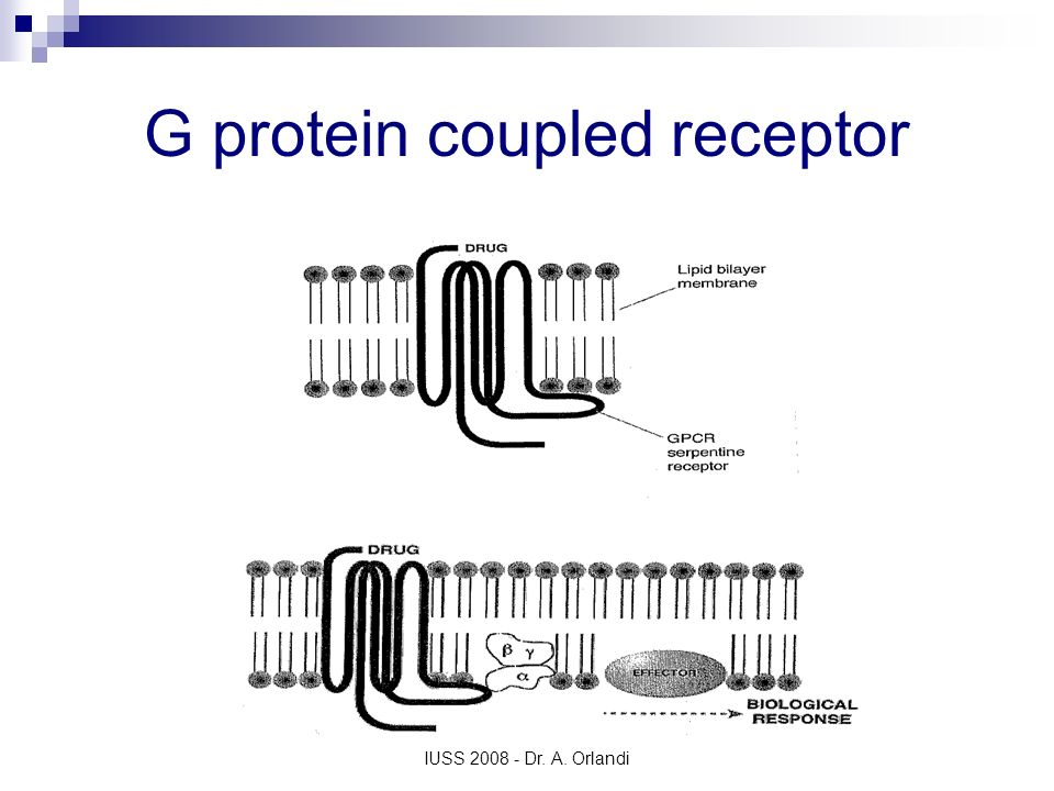 G protein coupled receptor