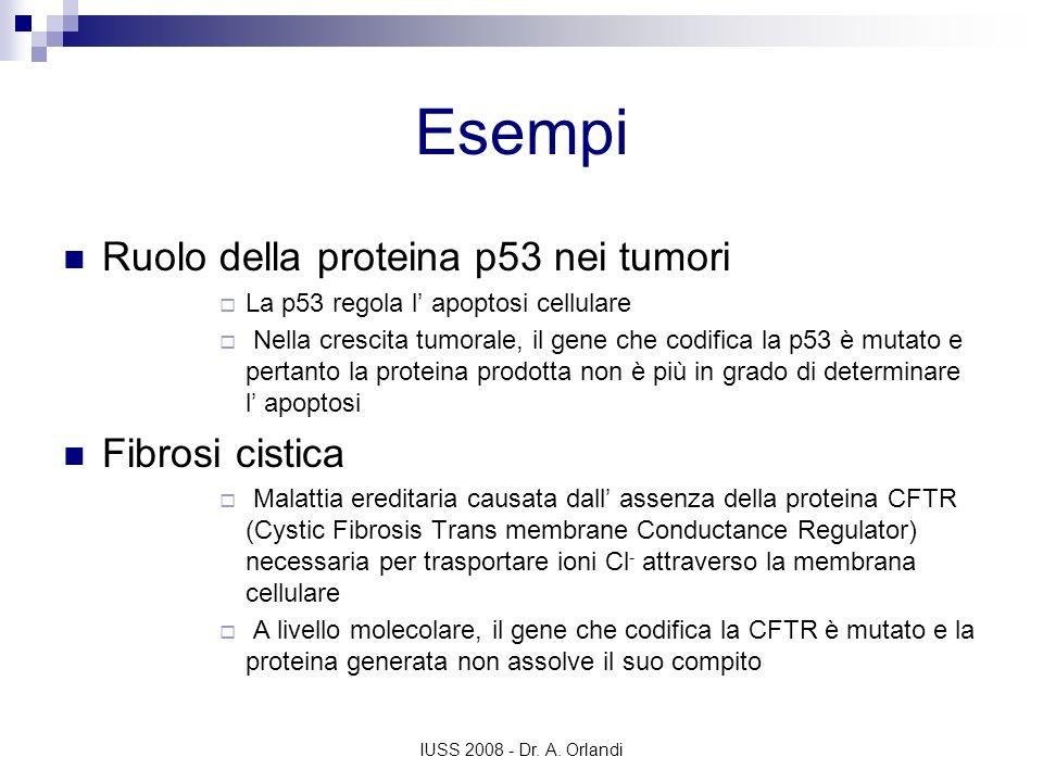 Esempi Ruolo della proteina p53 nei tumori Fibrosi cistica
