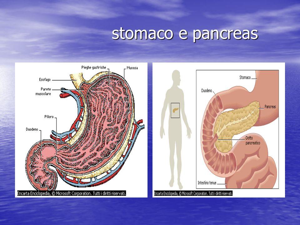 stomaco e pancreas