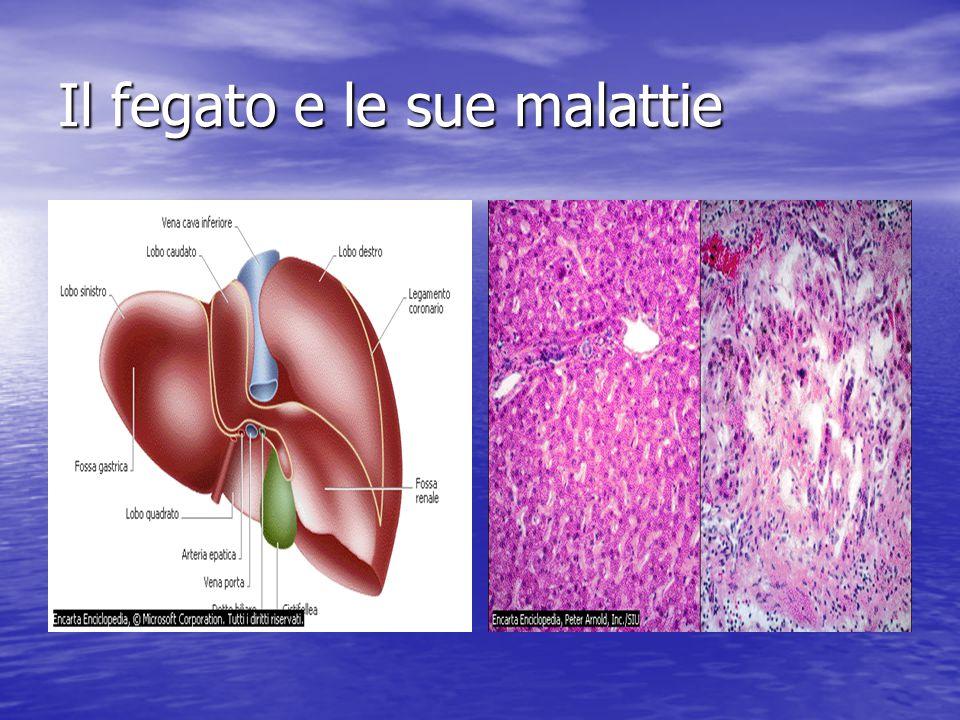 Il fegato e le sue malattie