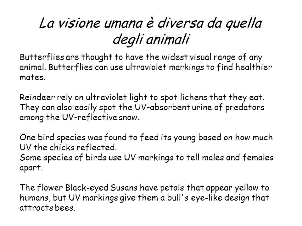 La visione umana è diversa da quella degli animali
