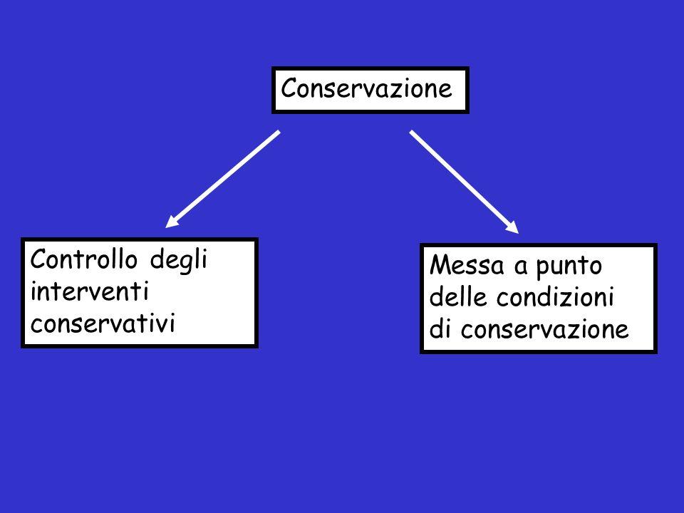 Conservazione Controllo degli interventi conservativi.