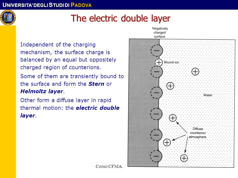 The electric double layer