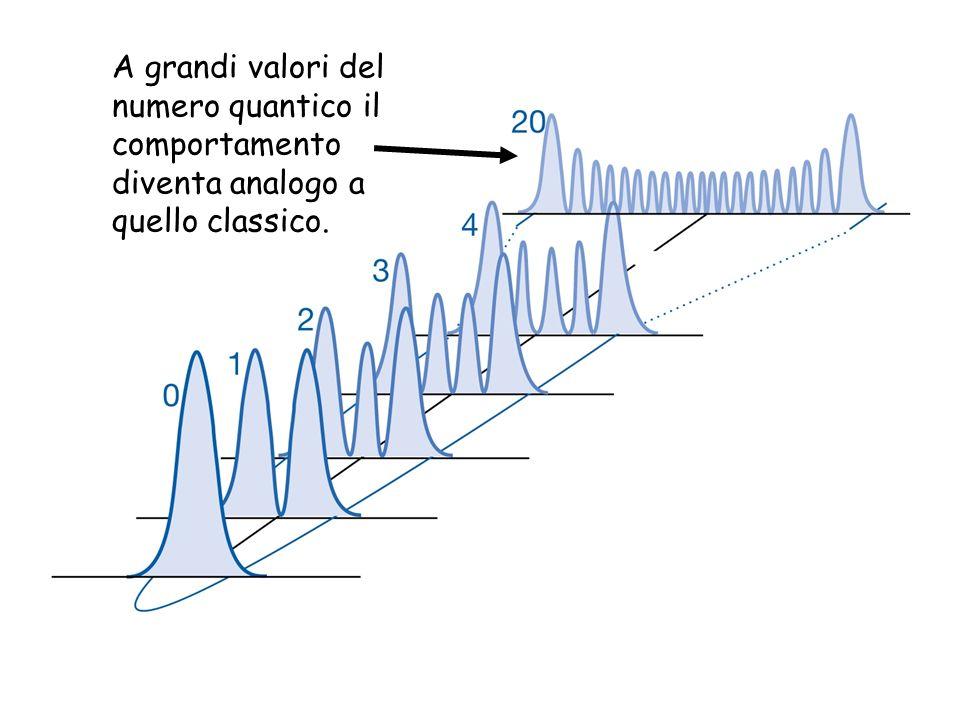 A grandi valori del numero quantico il comportamento diventa analogo a quello classico.