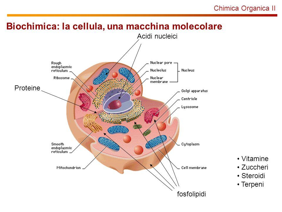 Biochimica: la cellula, una macchina molecolare