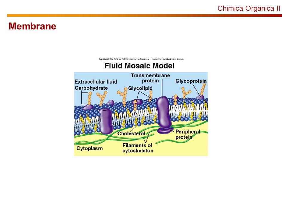 Chimica Organica II Membrane