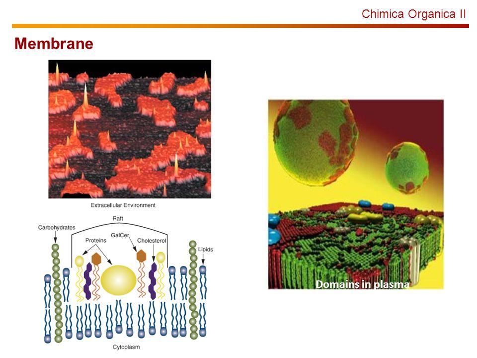 Chimica Organica II Membrane Domains in plasma membrane