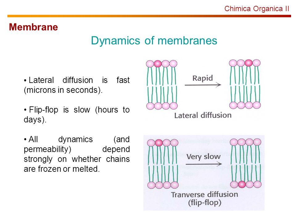 Dynamics of membranes Membrane