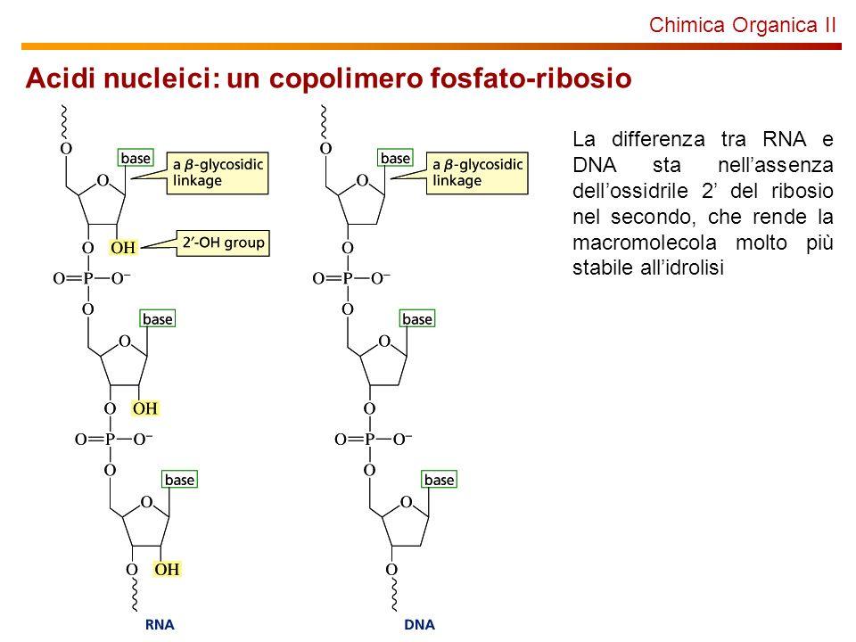 Acidi nucleici: un copolimero fosfato-ribosio