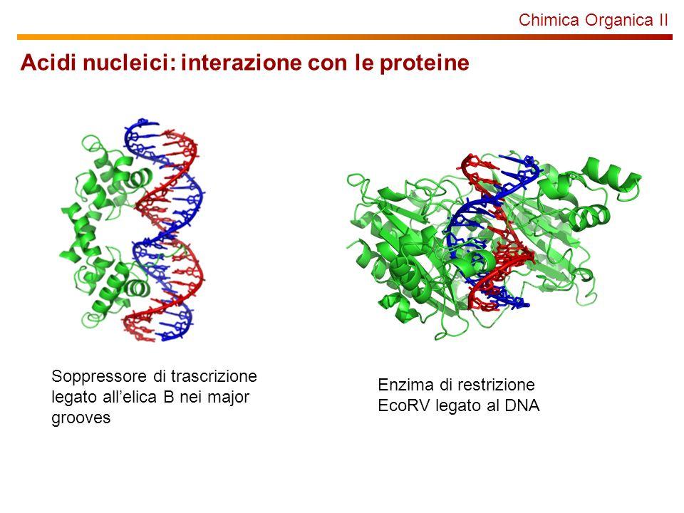 Acidi nucleici: interazione con le proteine