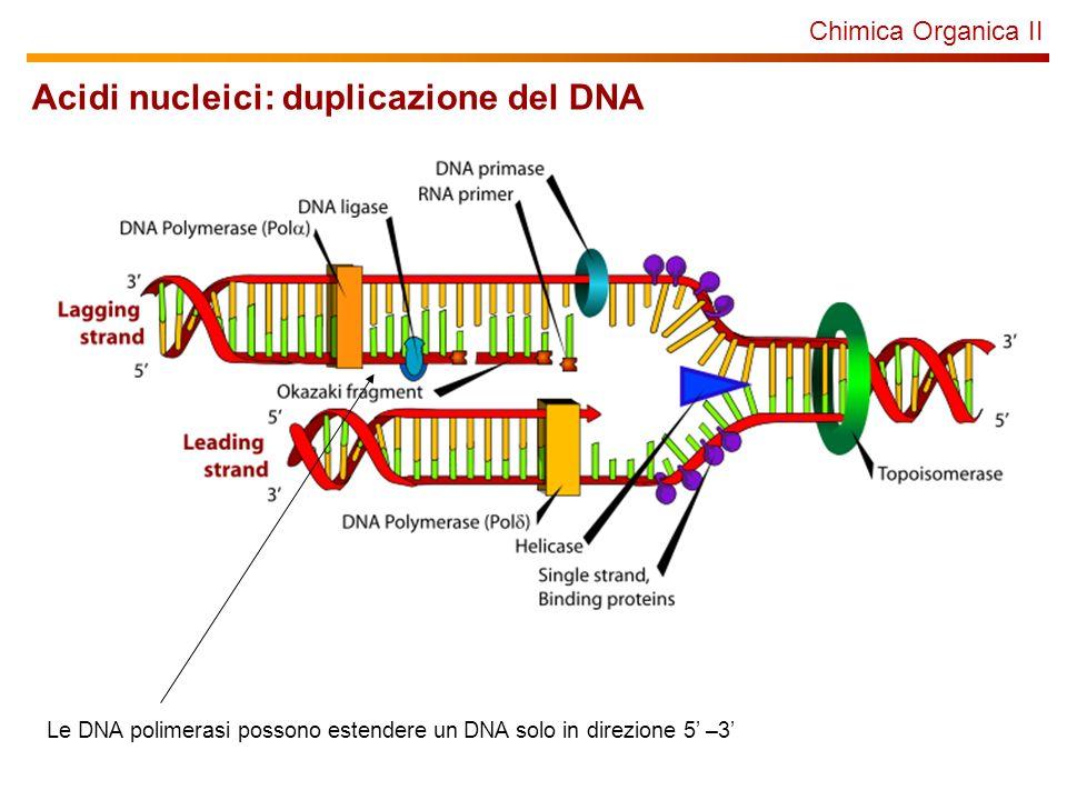 Acidi nucleici: duplicazione del DNA