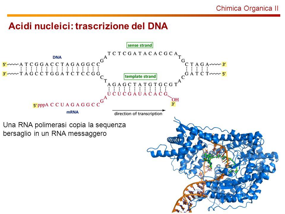Acidi nucleici: trascrizione del DNA