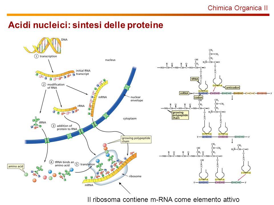 Acidi nucleici: sintesi delle proteine
