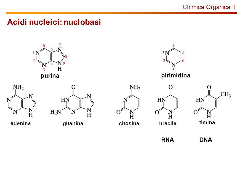 Acidi nucleici: nuclobasi