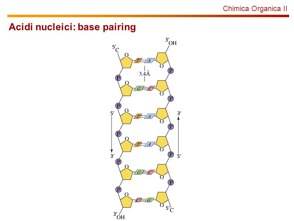 Acidi nucleici: base pairing