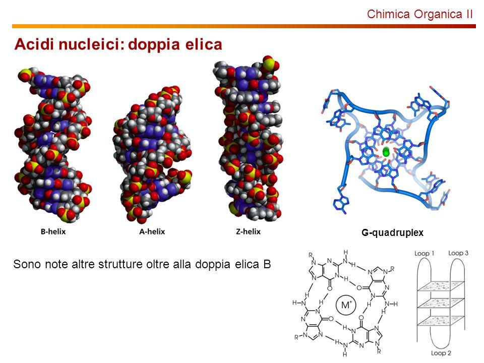 Acidi nucleici: doppia elica