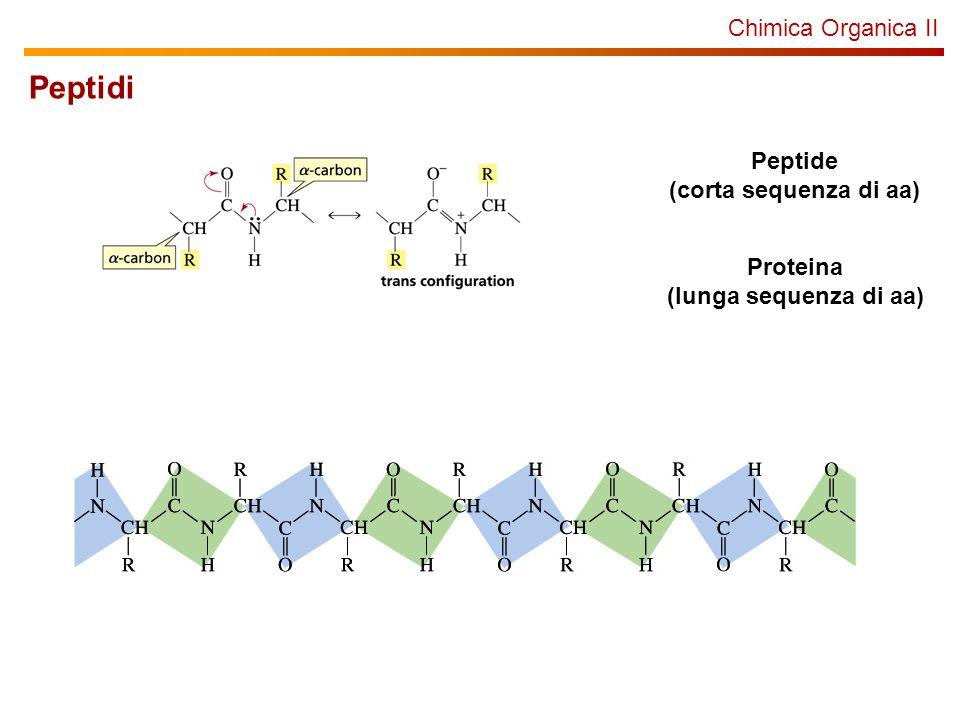 Peptidi Chimica Organica II Peptide (corta sequenza di aa) Proteina