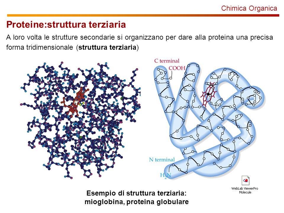 Esempio di struttura terziaria: mioglobina, proteina globulare