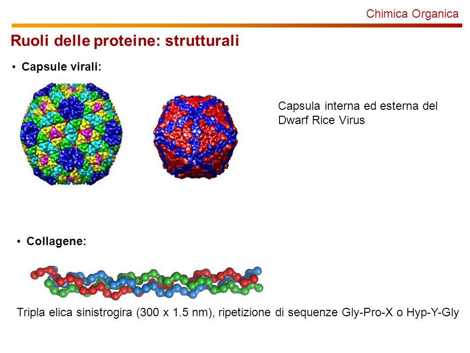 Ruoli delle proteine: strutturali