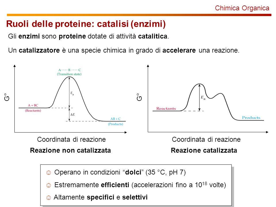 Ruoli delle proteine: catalisi (enzimi)