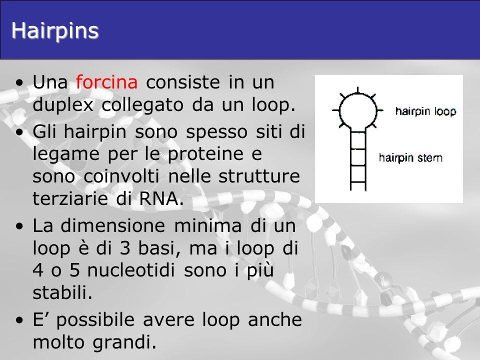 Hairpins Una forcina consiste in un duplex collegato da un loop.