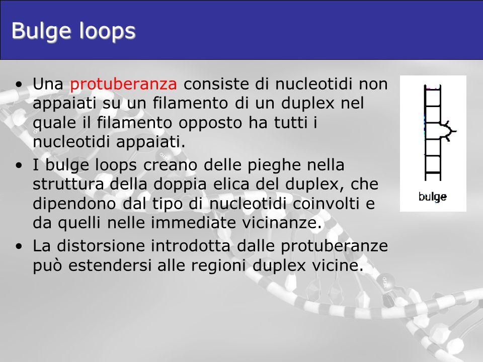 Bulge loops