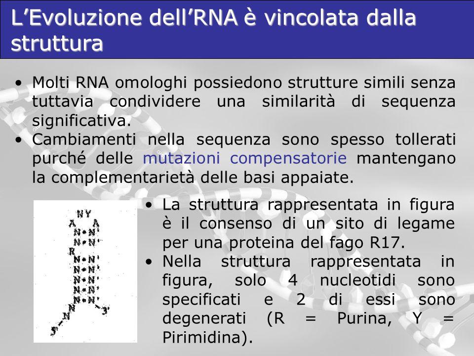 L'Evoluzione dell'RNA è vincolata dalla struttura