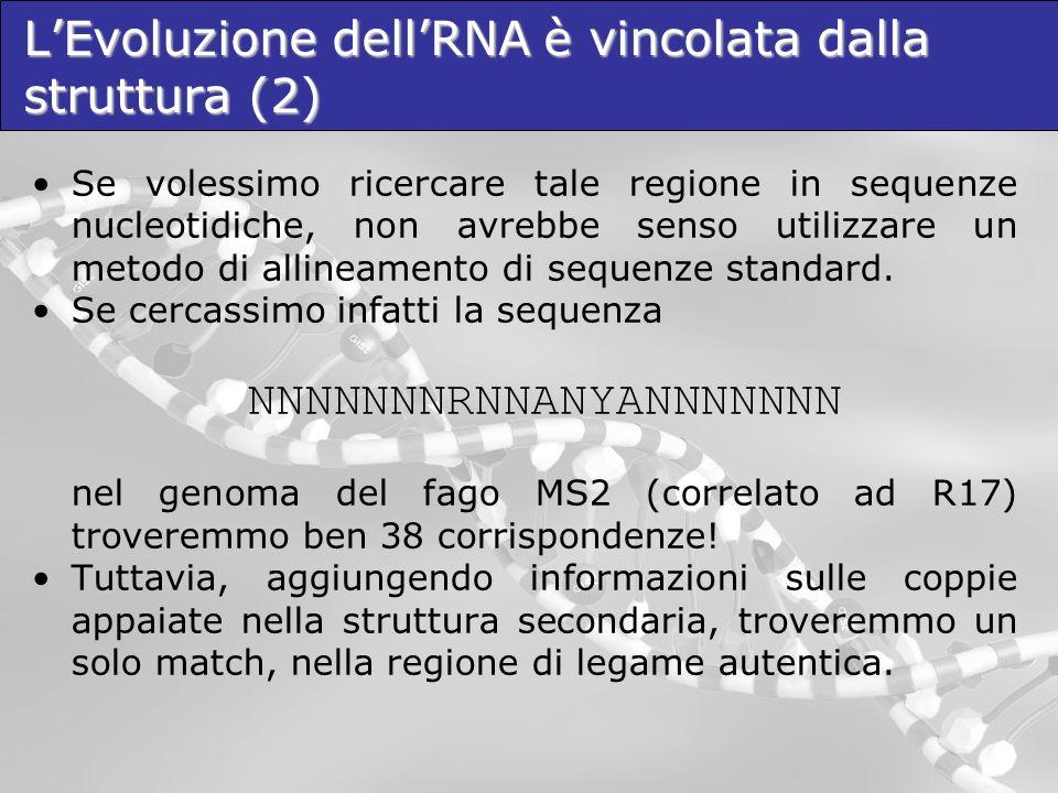 L'Evoluzione dell'RNA è vincolata dalla struttura (2)