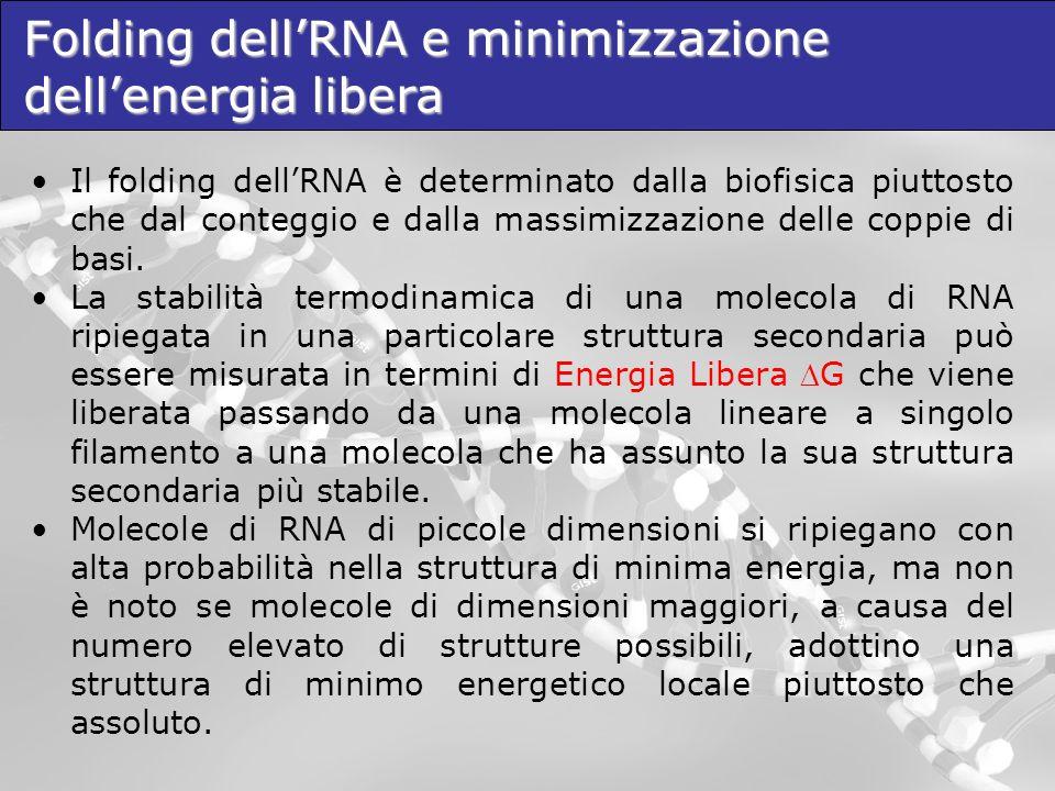 Folding dell'RNA e minimizzazione dell'energia libera