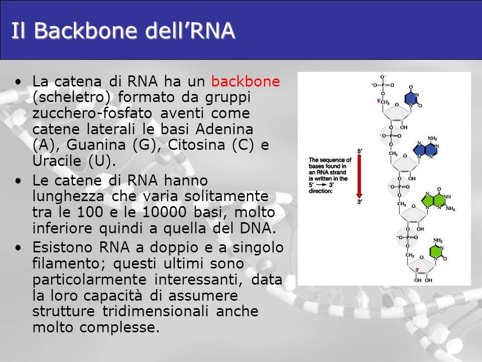 Il Backbone dell'RNA