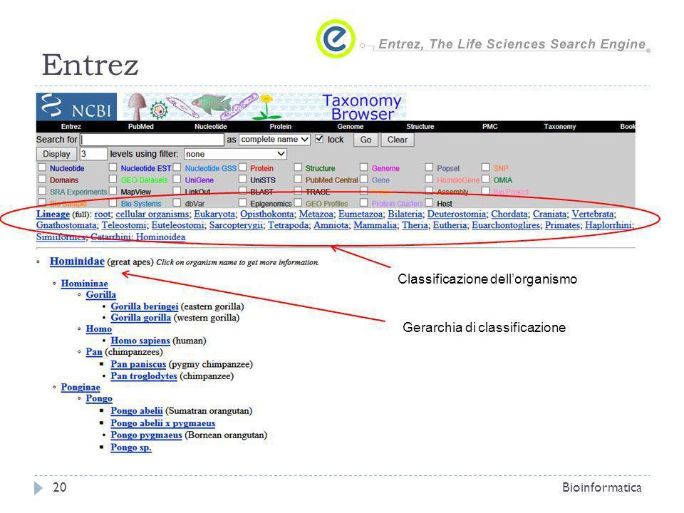 Entrez Classificazione dell'organismo Gerarchia di classificazione