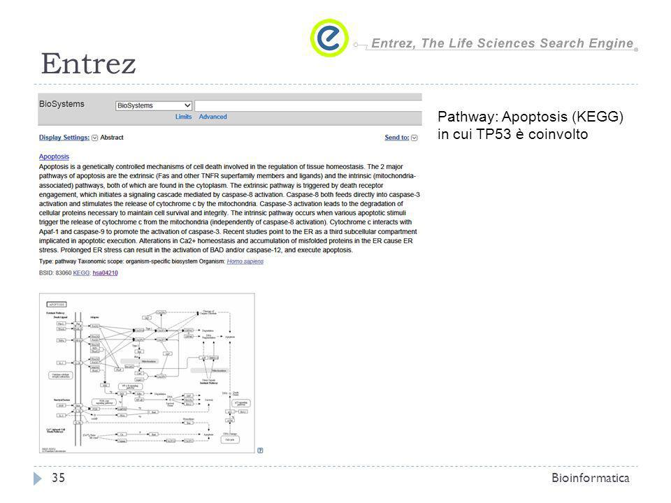 Entrez Pathway: Apoptosis (KEGG) in cui TP53 è coinvolto