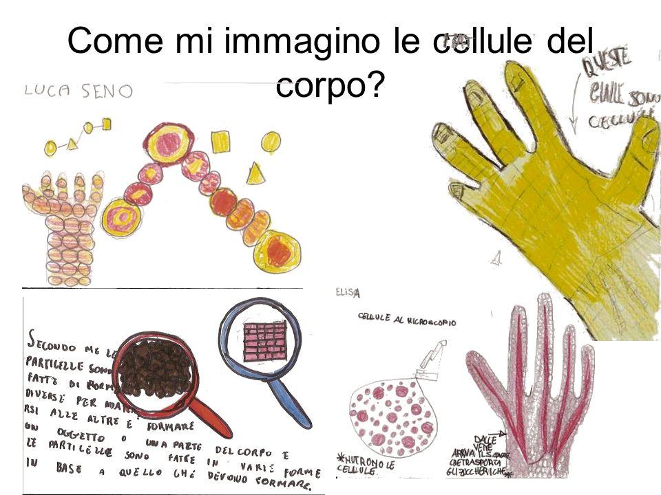 Come mi immagino le cellule del corpo