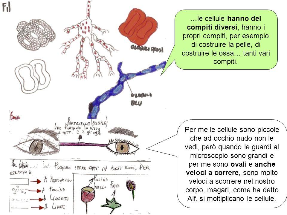 …le cellule hanno dei compiti diversi, hanno i propri compiti, per esempio di costruire la pelle, di costruire le ossa… tanti vari compiti.